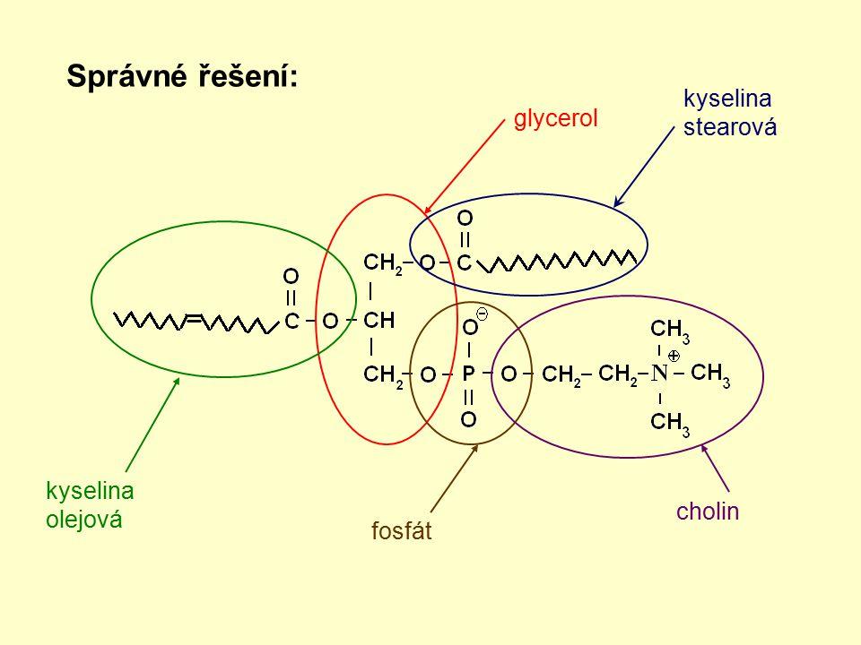 Správné řešení: glycerol kyselina stearová kyselina olejová fosfát cholin