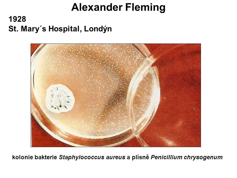 kolonie bakterie Staphylococcus aureus a plísně Penicillium chrysogenum 1928 St. Mary´s Hospital, Londýn
