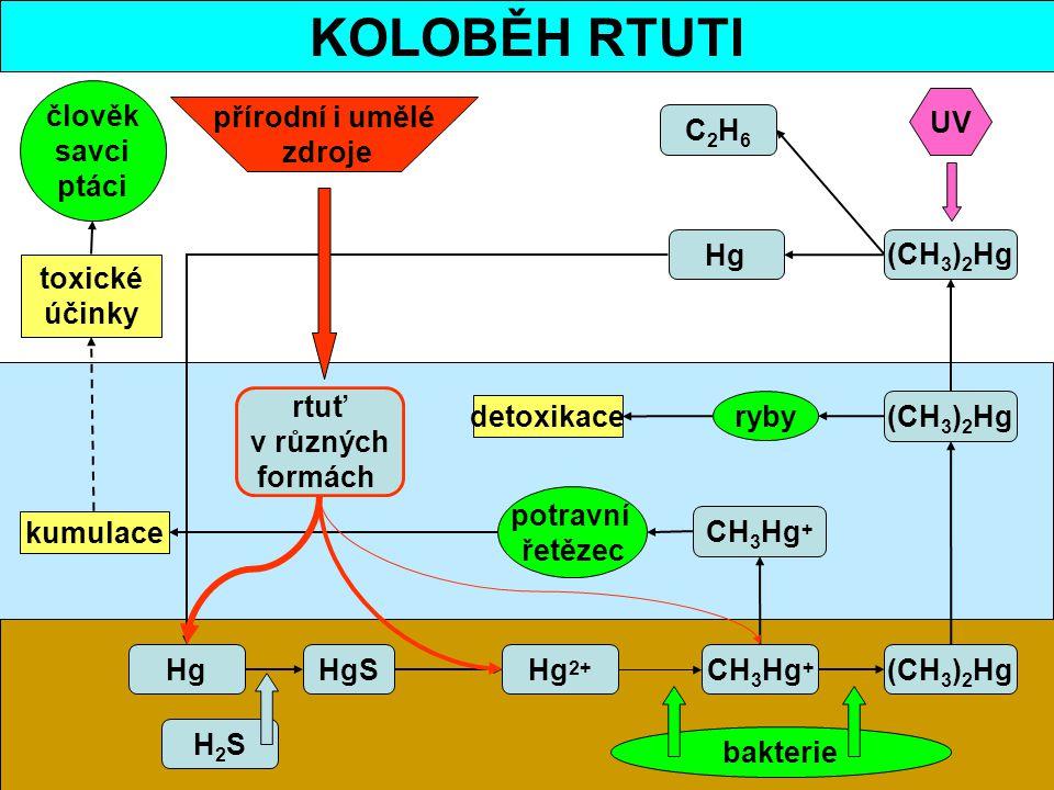 KOLOBĚH RTUTI C2H6C2H6 Hg HgSHg 2+ CH 3 Hg + (CH 3 ) 2 Hg bakterie (CH 3 ) 2 Hg UV (CH 3 ) 2 Hg CH 3 Hg + ryby detoxikace kumulace potravní řetězec čl