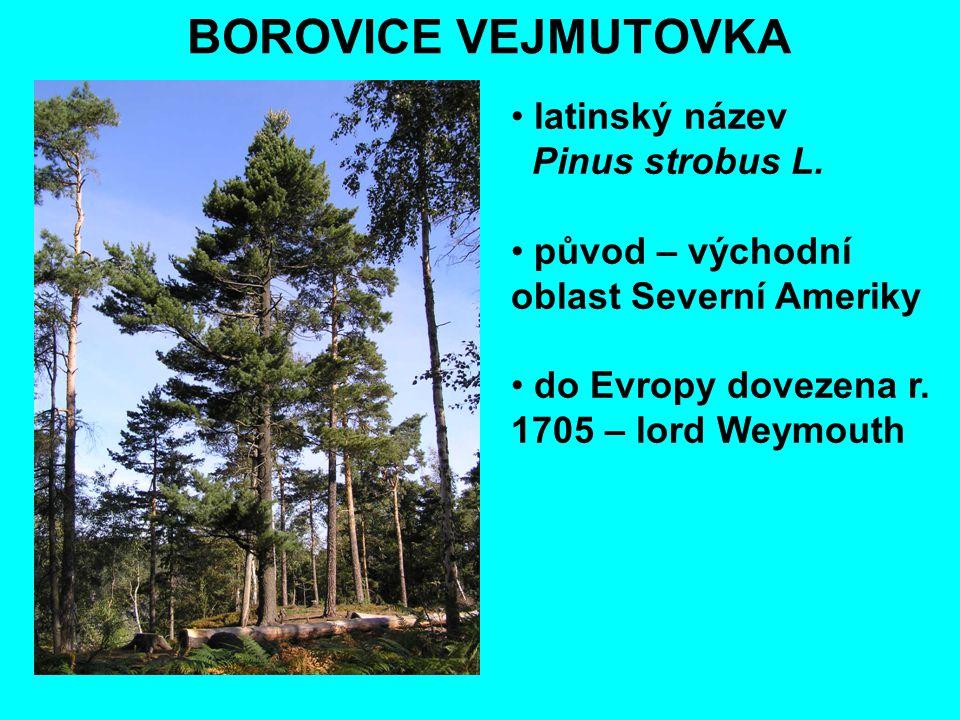 BOROVICE VEJMUTOVKA latinský název Pinus strobus L. původ – východní oblast Severní Ameriky do Evropy dovezena r. 1705 – lord Weymouth