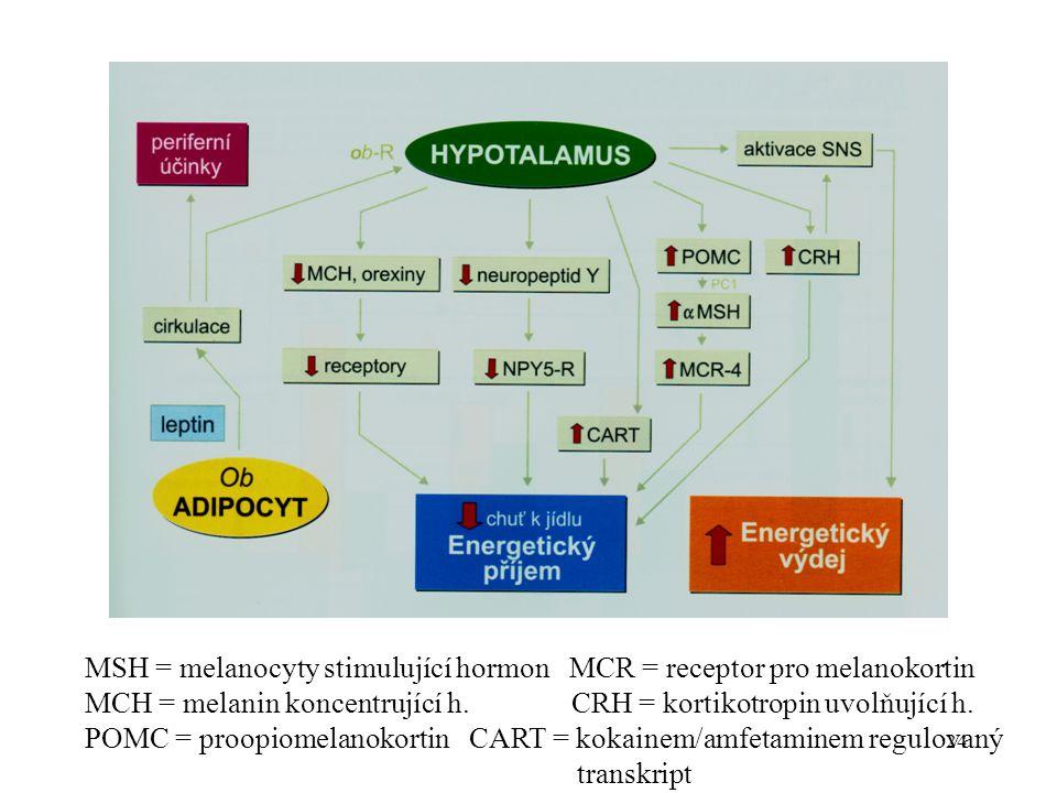 24 MSH = melanocyty stimulující hormon MCR = receptor pro melanokortin MCH = melanin koncentrující h.