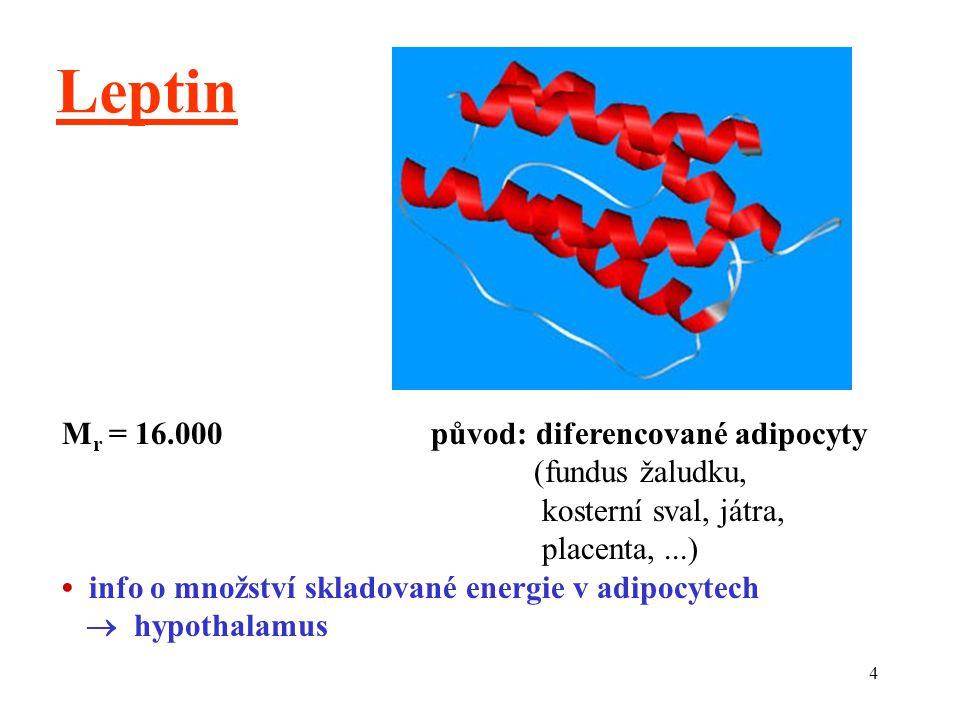 4 Leptin M r = 16.000 původ: diferencované adipocyty (fundus žaludku, kosterní sval, játra, placenta,...) info o množství skladované energie v adipocytech  hypothalamus