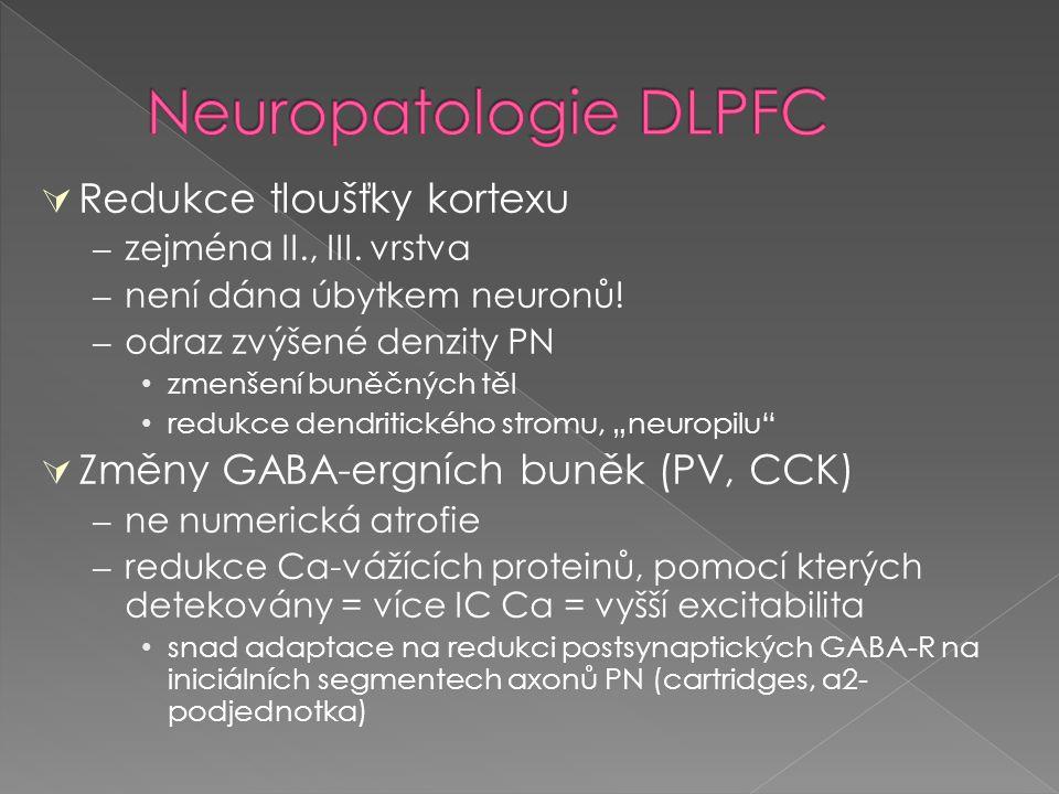  Redukce tloušťky kortexu – zejména II., III. vrstva – není dána úbytkem neuronů! – odraz zvýšené denzity PN zmenšení buněčných těl redukce dendritic