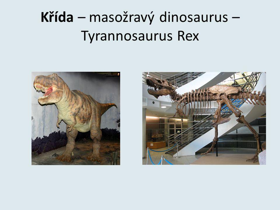 Křída – masožravý dinosaurus – Tyrannosaurus Rex