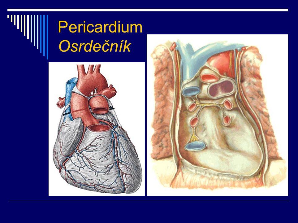 Pericardium Osrdečník