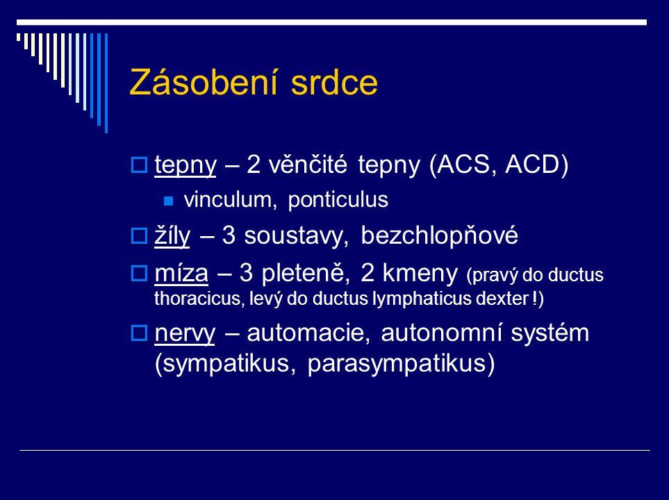 Zásobení srdce  tepny – 2 věnčité tepny (ACS, ACD) vinculum, ponticulus  žíly – 3 soustavy, bezchlopňové  míza – 3 pleteně, 2 kmeny (pravý do ductu