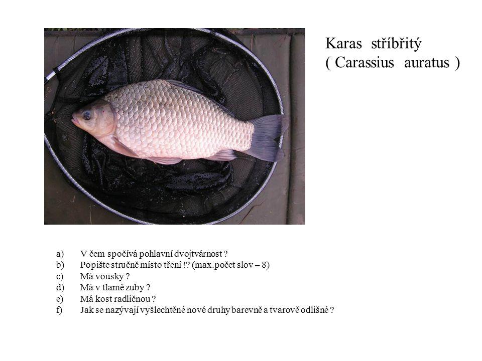 Karas stříbřitý ( Carassius auratus ) a)V čem spočívá pohlavní dvojtvárnost ? b)Popište stručně místo tření !? (max.počet slov – 8) c)Má vousky ? d)Má