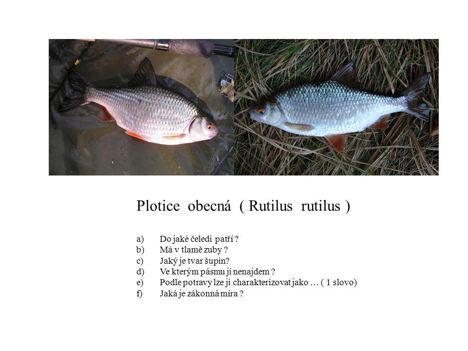 Plotice obecná ( Rutilus rutilus ) a)Do jaké čeledi patří ? b)Má v tlamě zuby ? c)Jaký je tvar šupin? d)Ve kterým pásmu ji nenajdem ? e)Podle potravy