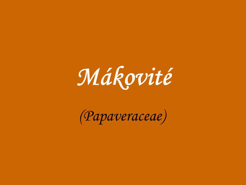 Mákovité (Papaveraceae)