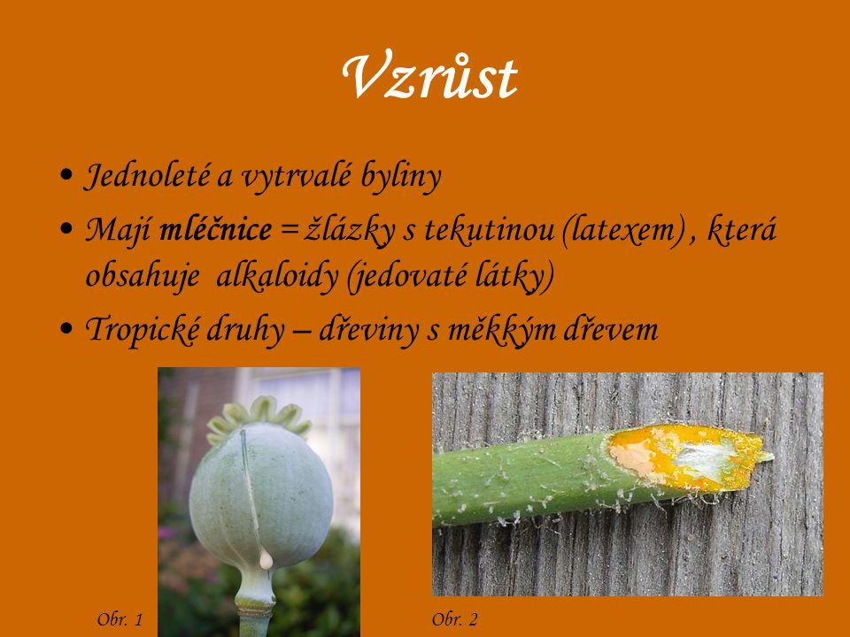 Vzrůst Jednoleté a vytrvalé byliny Mají mléčnice = žlázky s tekutinou (latexem), která obsahuje alkaloidy (jedovaté látky) Tropické druhy – dřeviny s