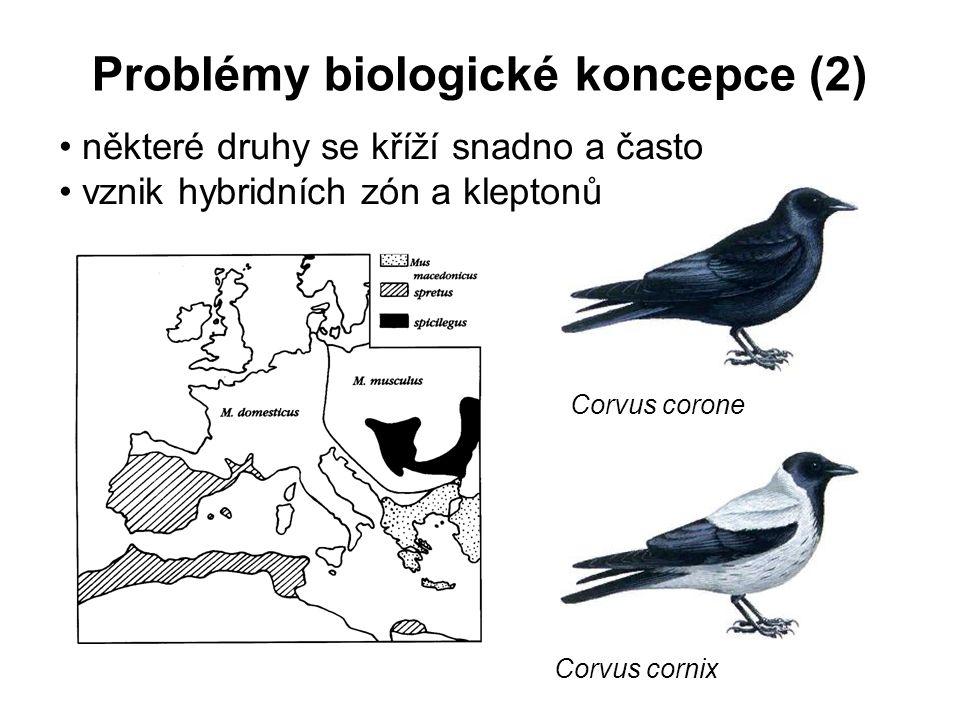 Problémy biologické koncepce (2) některé druhy se kříží snadno a často vznik hybridních zón a kleptonů Corvus corone Corvus cornix