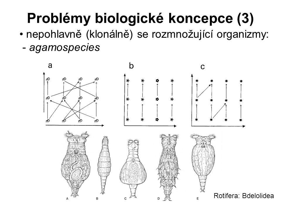 Problémy biologické koncepce (3) nepohlavně (klonálně) se rozmnožující organizmy: - agamospecies Rotifera: Bdelolidea
