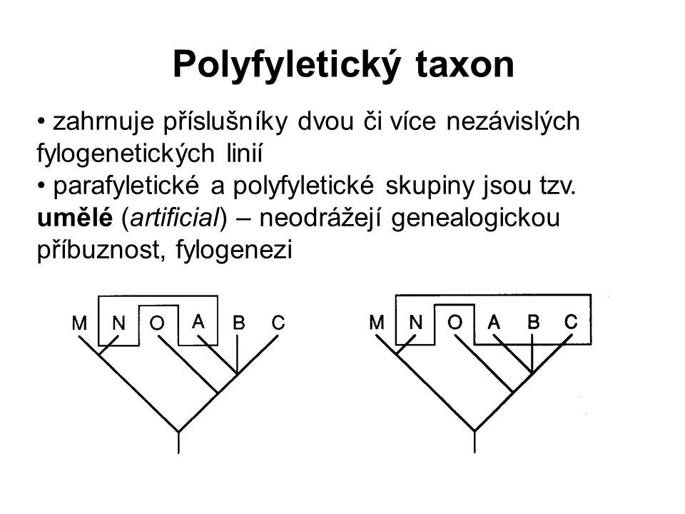 Polyfyletický taxon zahrnuje příslušníky dvou či více nezávislých fylogenetických linií parafyletické a polyfyletické skupiny jsou tzv. umělé (artific