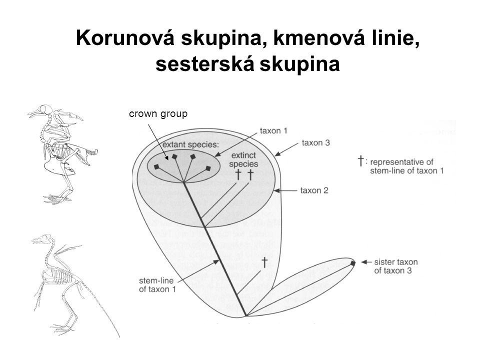 Korunová skupina, kmenová linie, sesterská skupina crown group
