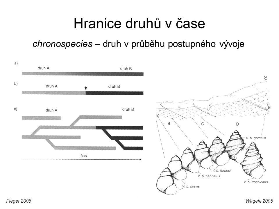 Hranice druhů v čase Wägele 2005Fleger 2005 chronospecies – druh v průběhu postupného vývoje