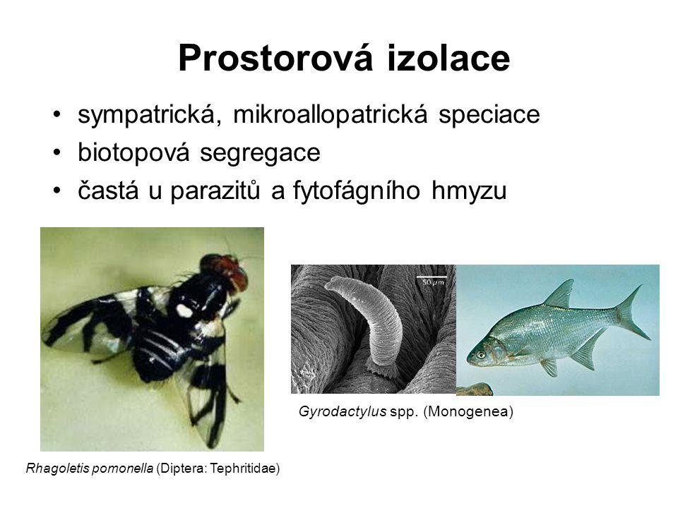 sympatrická, mikroallopatrická speciace biotopová segregace častá u parazitů a fytofágního hmyzu Prostorová izolace Rhagoletis pomonella (Diptera: Tep