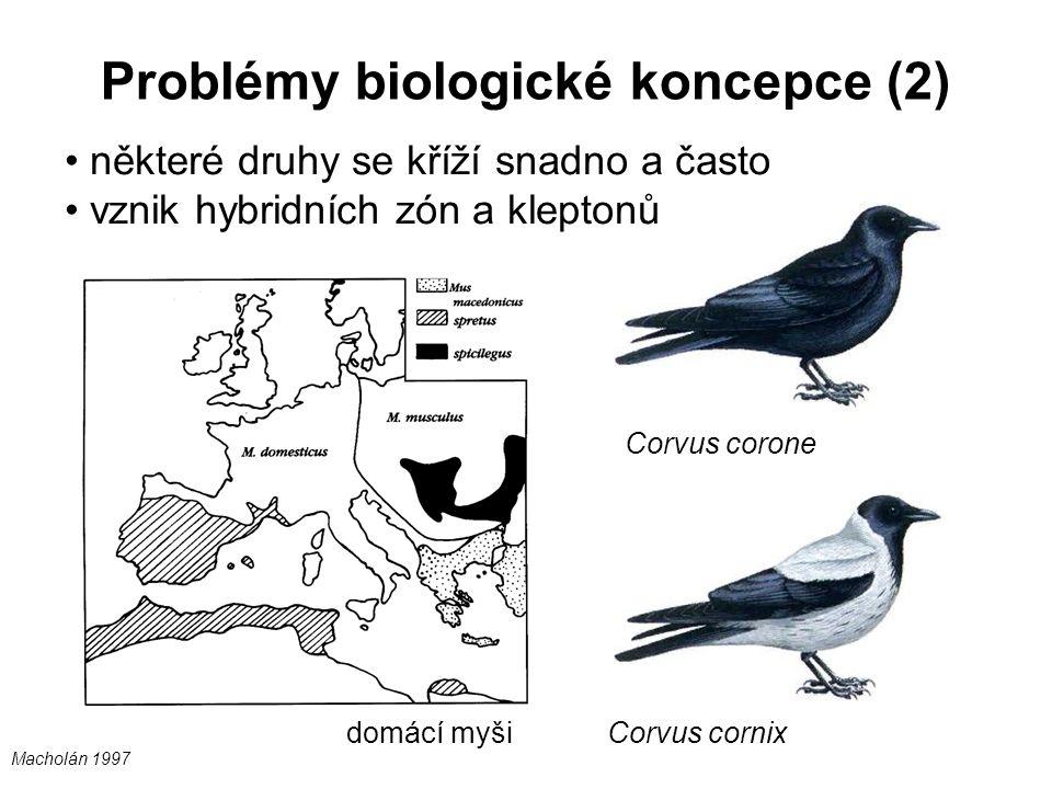 Problémy biologické koncepce (2) některé druhy se kříží snadno a často vznik hybridních zón a kleptonů Corvus corone Corvus cornix domácí myši Macholá