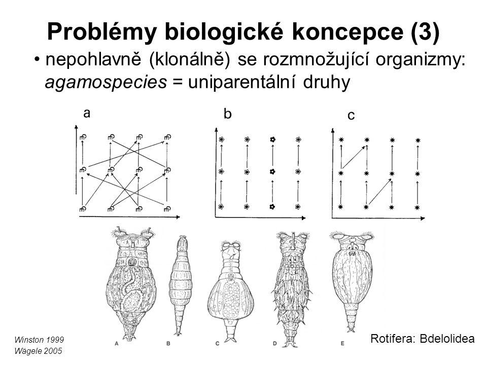 Problémy biologické koncepce (3) nepohlavně (klonálně) se rozmnožující organizmy: agamospecies = uniparentální druhy Rotifera: Bdelolidea Winston 1999