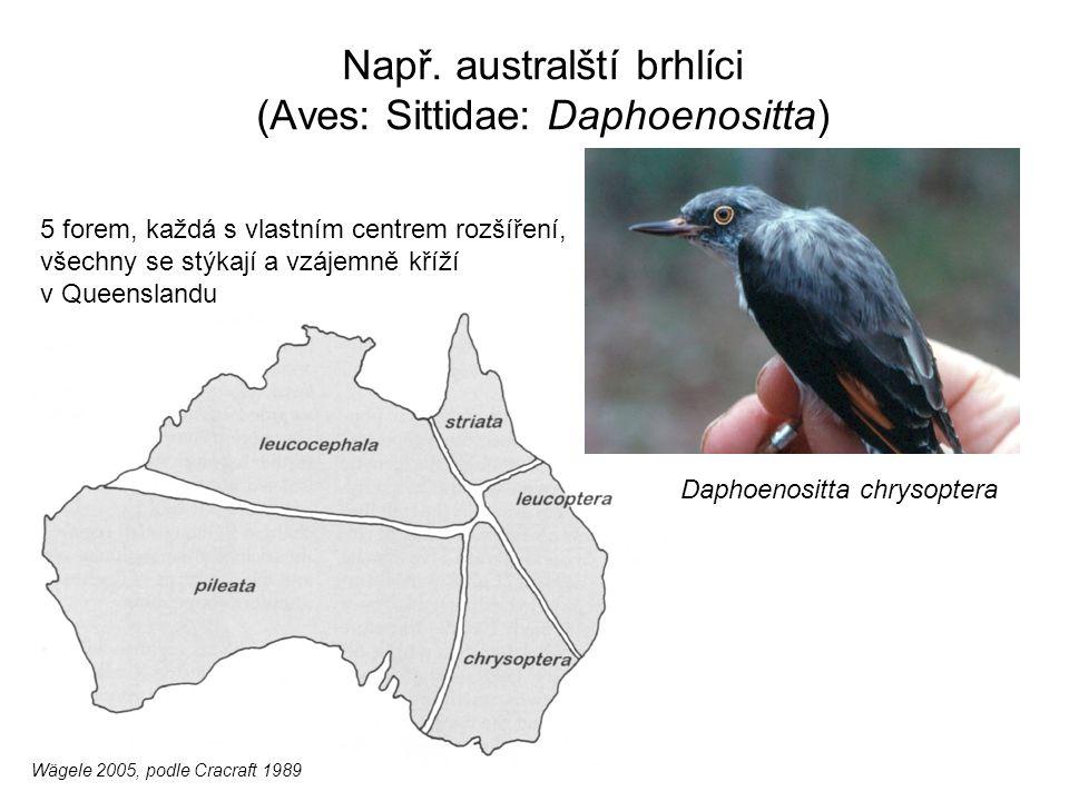 Např. australští brhlíci (Aves: Sittidae: Daphoenositta) Daphoenositta chrysoptera Wägele 2005, podle Cracraft 1989 5 forem, každá s vlastním centrem