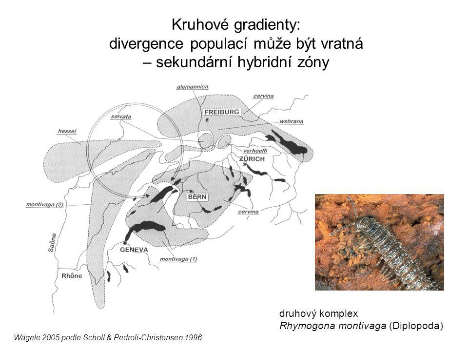 Kruhové gradienty: divergence populací může být vratná – sekundární hybridní zóny druhový komplex Rhymogona montivaga (Diplopoda) Wägele 2005 podle Sc