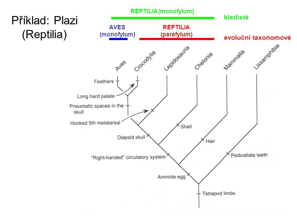 Příklad: Plazi (Reptilia) REPTILIA (parafylum) AVES (monofylum) REPTiLIA (monofylum) kladisté evoluční taxonomové