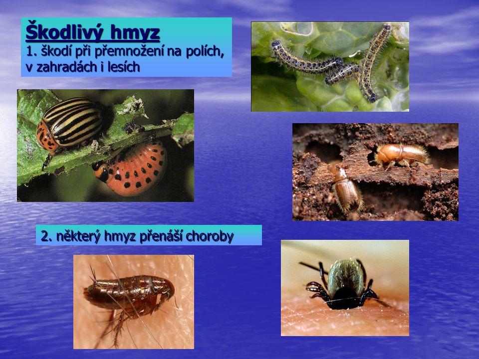Škodlivý hmyz 1. škodí při přemnožení na polích, v zahradách i lesích 2. některý hmyz přenáší choroby