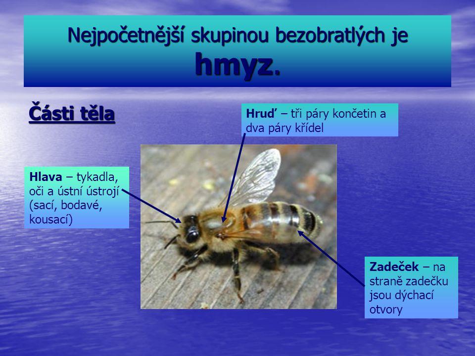 Nejpočetnější skupinou bezobratlých je hmyz. Části těla Hlava – tykadla, oči a ústní ústrojí (sací, bodavé, kousací) Hruď – tři páry končetin a dva pá