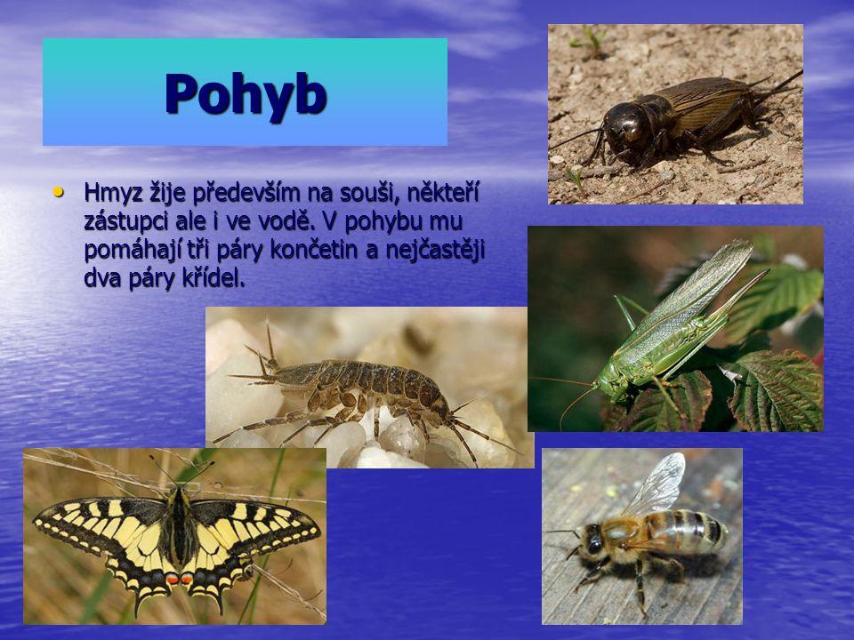 Pohyb Hmyz žije především na souši, někteří zástupci ale i ve vodě. V pohybu mu pomáhají tři páry končetin a nejčastěji dva páry křídel. Hmyz žije pře