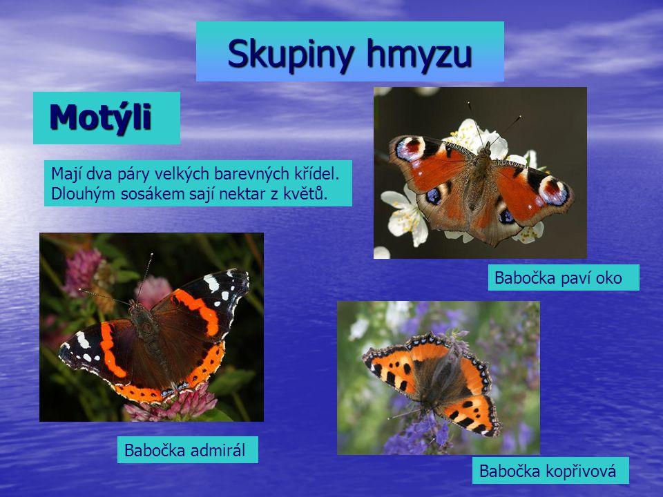 Skupiny hmyzu Motýli Motýli Mají dva páry velkých barevných křídel. Dlouhým sosákem sají nektar z květů. Babočka admirál Babočka kopřivová Babočka pav