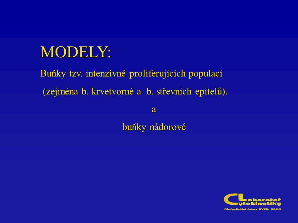 MODELY: Buňky tzv. intenzívně proliferujících populací (zejména b. krvetvorné a b. střevních epitelů). (zejména b. krvetvorné a b. střevních epitelů).