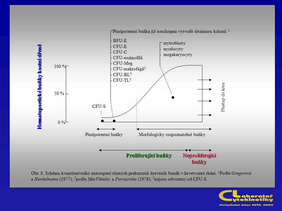 Pluripotentní buňka již neschopná vytvořit slezinnou kolonii 1 CFU-S - BFU-E - CFU-E - CFU-C - CFU-eozinofilů - CFU-Meg - CFU-makrofágů 2 - CFU-BL 3 -