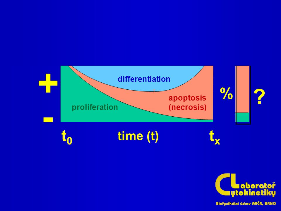 differentiation apoptosis (necrosis) proliferation ? % + - t0t0 txtx time (t)
