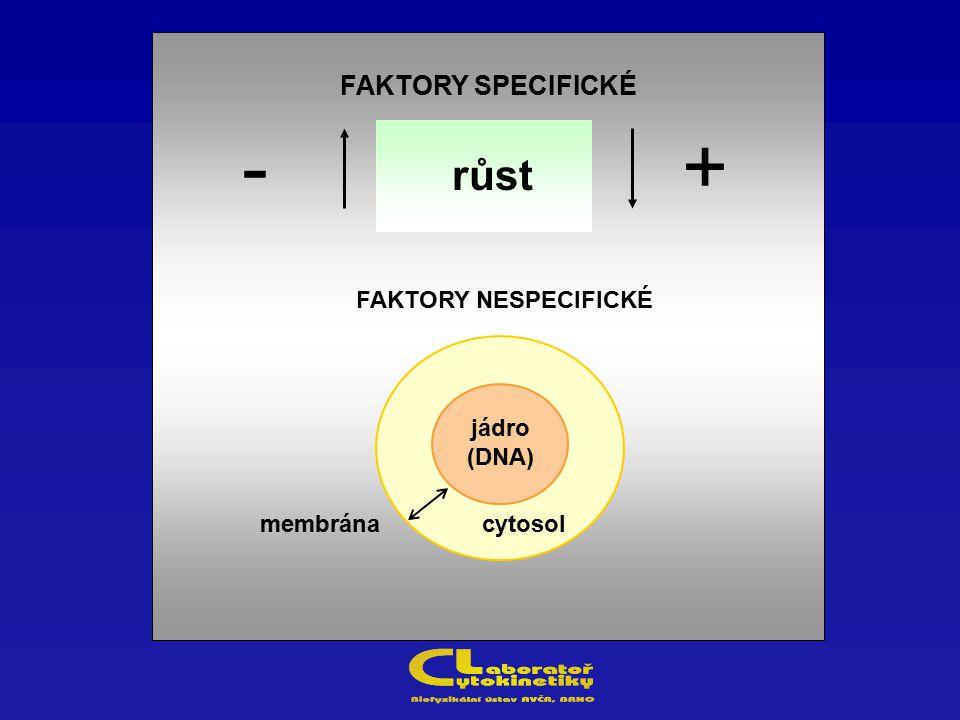 FAKTORY SPECIFICKÉ FAKTORY NESPECIFICKÉ membrána +- cytosol jádro (DNA) růst