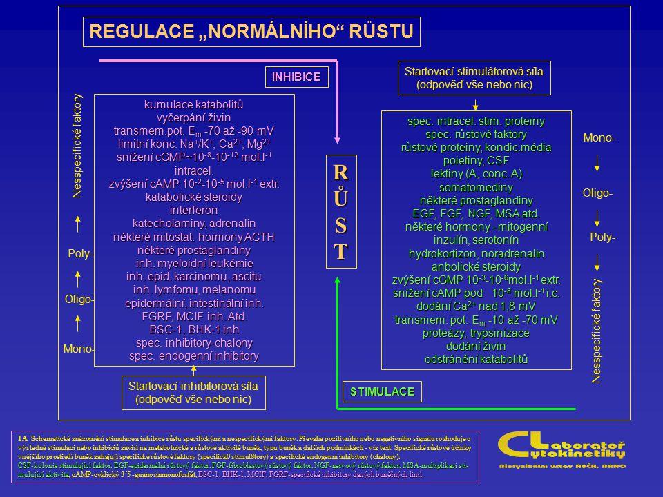 """REGULACE """"NORMÁLNÍHO"""" RŮSTU 1A Schematické znázornění stimulace a inhibice růstu specifickými a nespecifickými faktory. Převaha pozitivního nebo negat"""