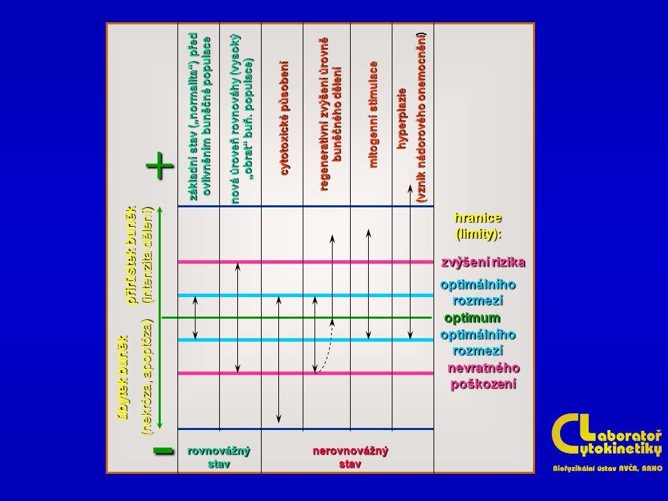 """základní stav (""""normalita"""") před ovlivněním buněčné populace nová úroveň rovnováhy (vysoký """"obrat"""" buň. populace) cytotoxické působení regenerativní z"""
