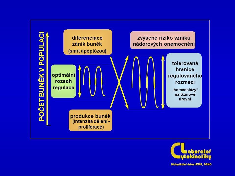 """optimální rozsah regulace tolerovaná hranice regulovaného rozmezí """"homeostázy"""" na tkáňové úrovni diferenciace zánik buněk (smrt apoptózou) produkce bu"""