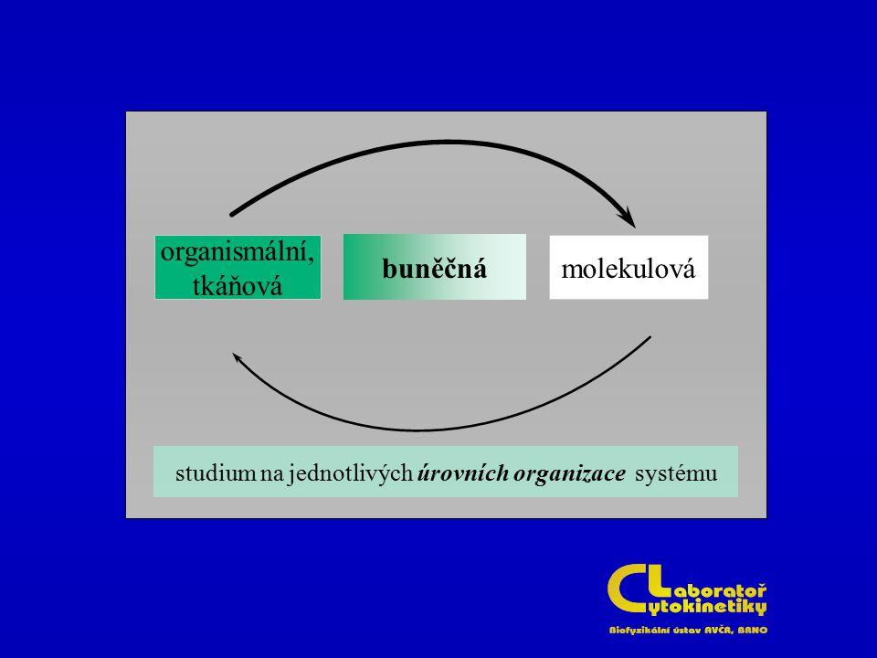 organismální, tkáňová molekulovábuněčná studium na jednotlivých úrovních organizace systému