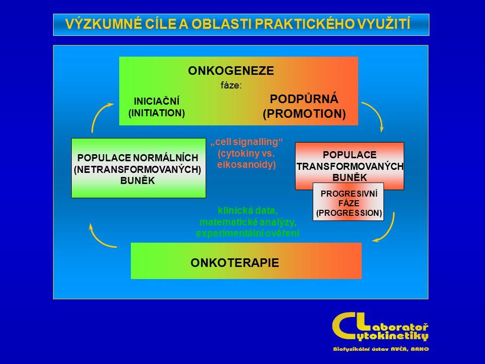 """POPULACE NORMÁLNÍCH (NETRANSFORMOVANÝCH) BUNĚK ONKOGENEZE fáze: INICIAČNÍ (INITIATION) PODPŮRNÁ (PROMOTION) """"cell signalling"""" (cytokiny vs. eikosanoid"""