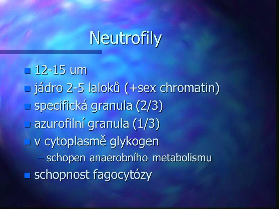 Neutrofily n 12-15 um n jádro 2-5 laloků (+sex chromatin) n specifická granula (2/3) n azurofilní granula (1/3) n v cytoplasmě glykogen –schopen anaer