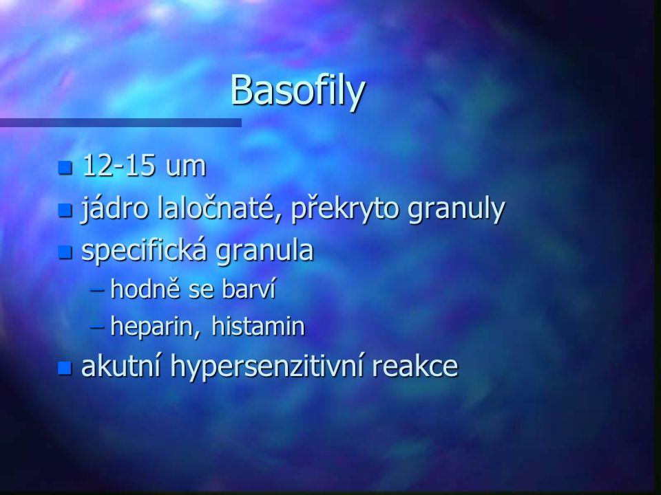 Basofily n 12-15 um n jádro laločnaté, překryto granuly n specifická granula –hodně se barví –heparin, histamin n akutní hypersenzitivní reakce