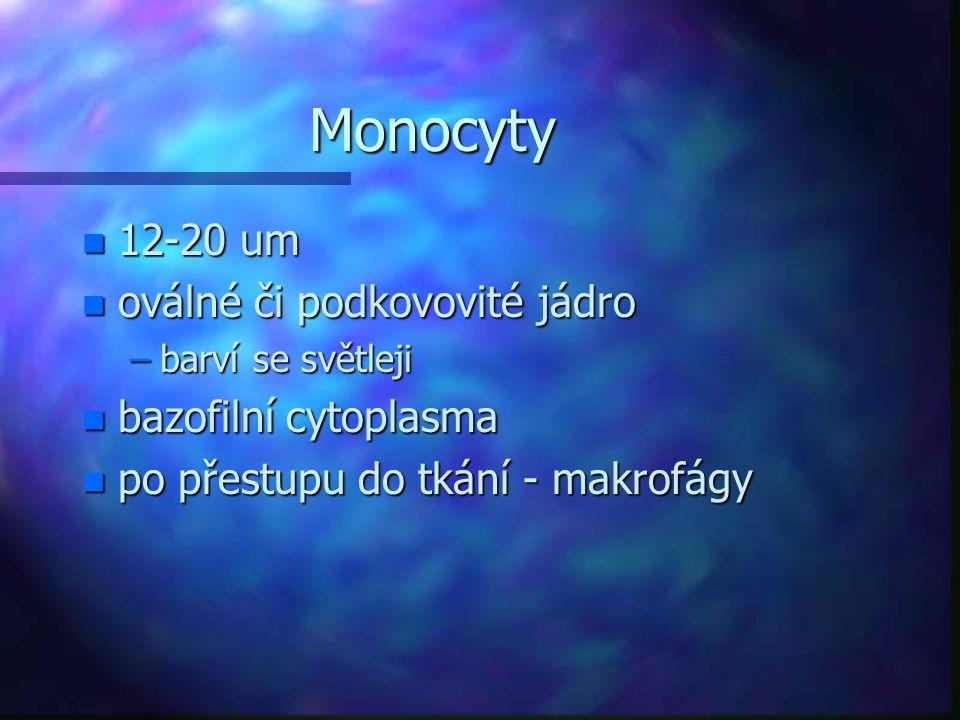 Monocyty n 12-20 um n oválné či podkovovité jádro –barví se světleji n bazofilní cytoplasma n po přestupu do tkání - makrofágy