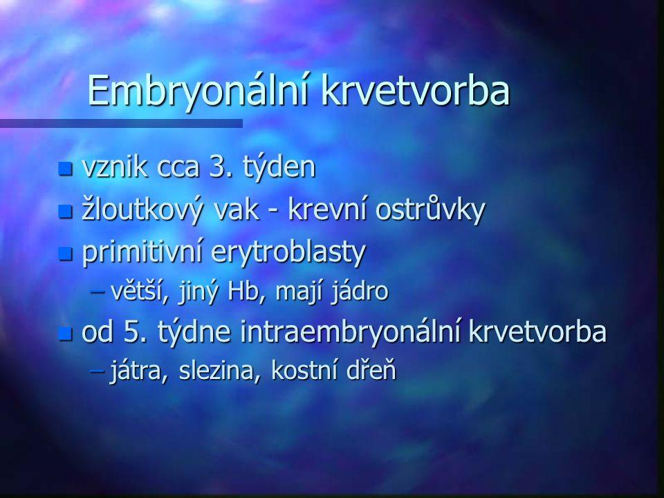 Embryonální krvetvorba n vznik cca 3. týden n žloutkový vak - krevní ostrůvky n primitivní erytroblasty –větší, jiný Hb, mají jádro n od 5. týdne intr