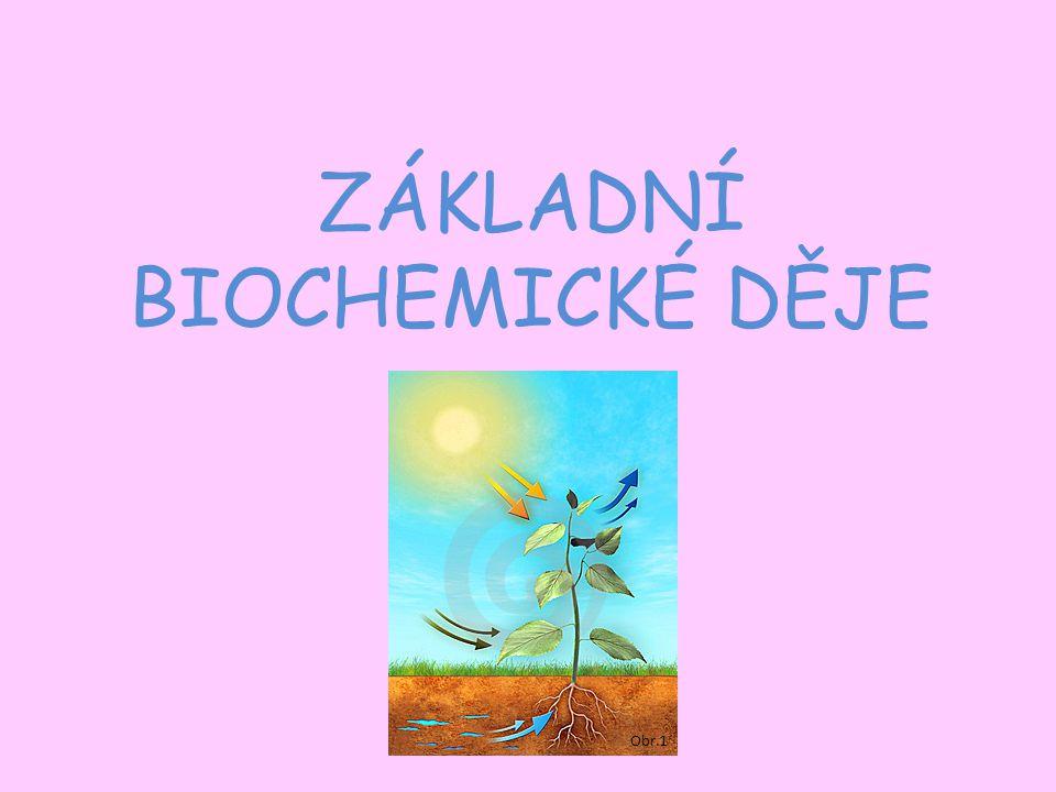 ZÁKLADNÍ BIOCHEMICKÉ DĚJE Obr.1