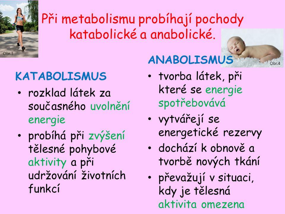 Obr.4 Při metabolismu probíhají pochody katabolické a anabolické. KATABOLISMUS rozklad látek za současného uvolnění energie probíhá při zvýšení tělesn