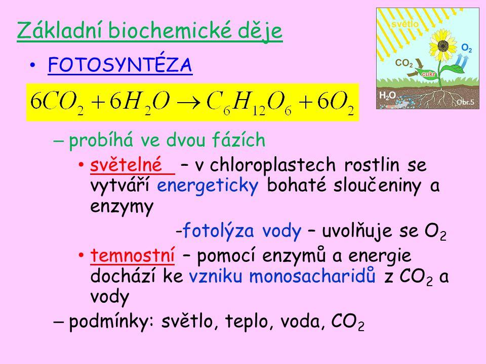 Základní biochemické děje FOTOSYNTÉZA – probíhá ve dvou fázích světelné – v chloroplastech rostlin se vytváří energeticky bohaté sloučeniny a enzymy -