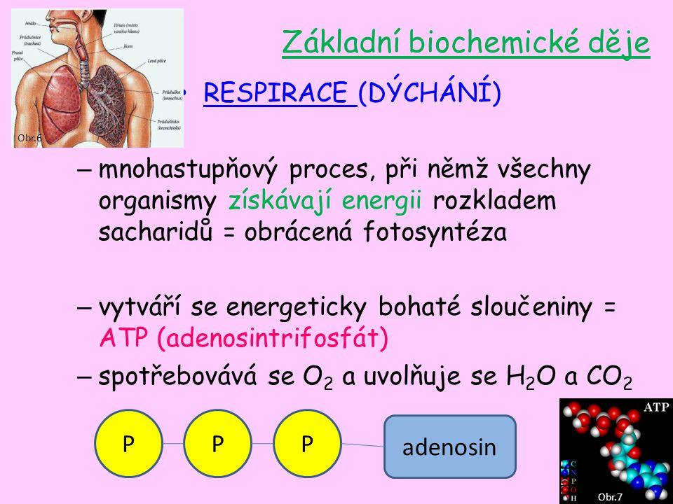 RESPIRACE (DÝCHÁNÍ) – mnohastupňový proces, při němž všechny organismy získávají energii rozkladem sacharidů = obrácená fotosyntéza – vytváří se energ