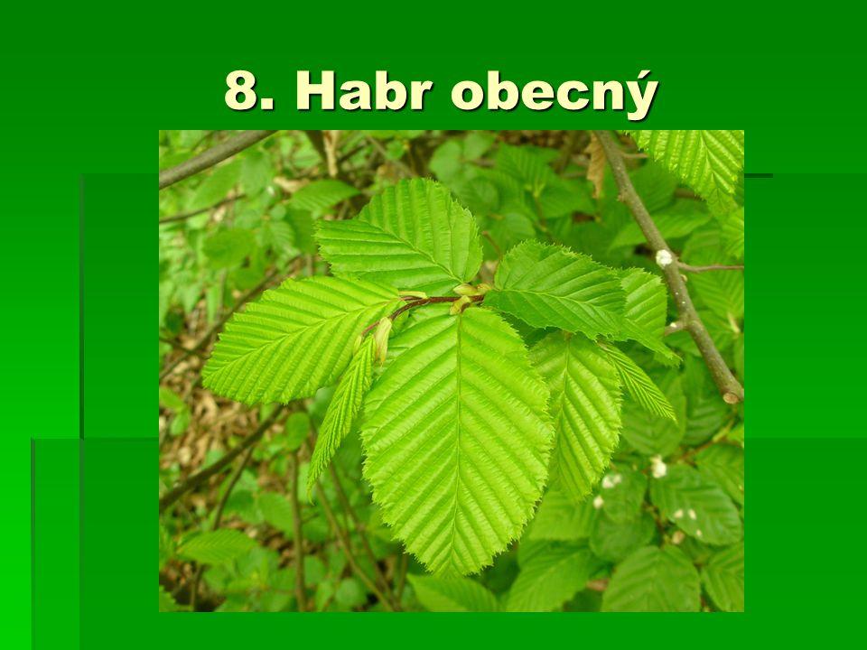 8. Habr obecný