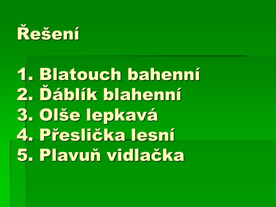 Řešení 1. Blatouch bahenní 2. Ďáblík blahenní 3. Olše lepkavá 4. Přeslička lesní 5. Plavuň vidlačka
