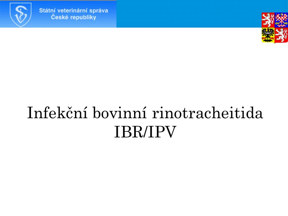Infekční bovinní rinotracheitida IBR/IPV