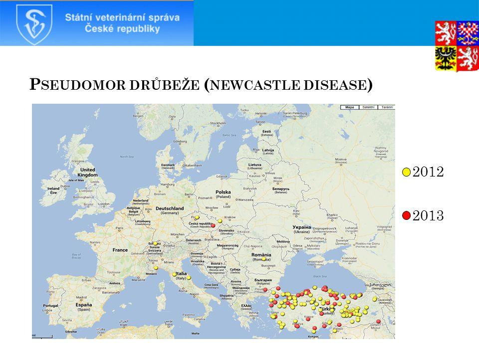 P SEUDOMOR DRŮBEŽE ( NEWCASTLE DISEASE ) 2012 2013 42